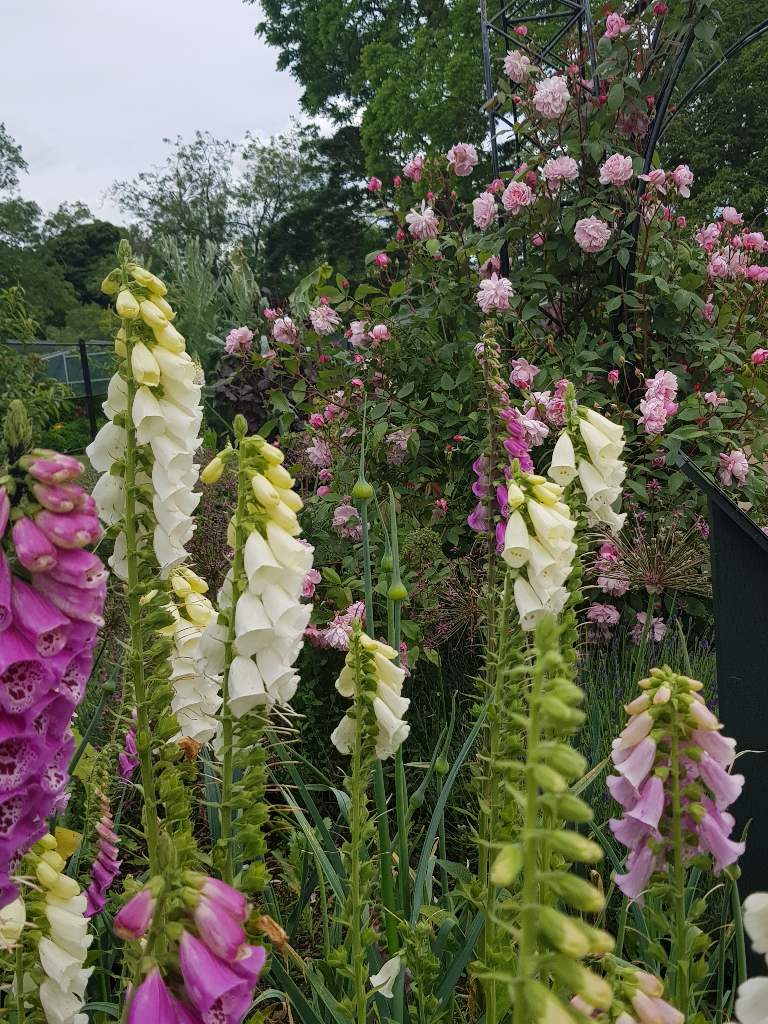 Ode to an English Garden
